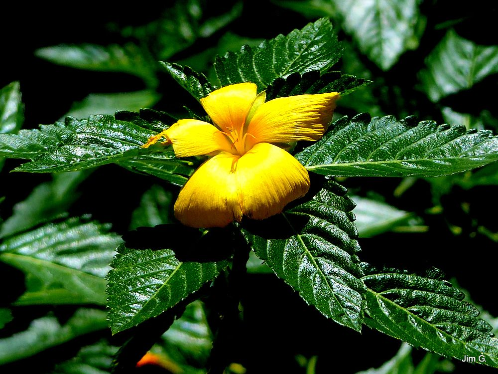 Photo in Nature #flower #bloom #leaves #yellow #green
