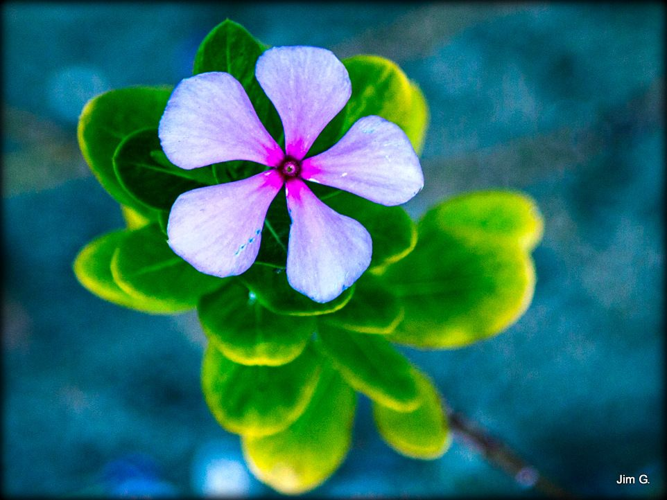 Photo in Nature #flower #bloom #top