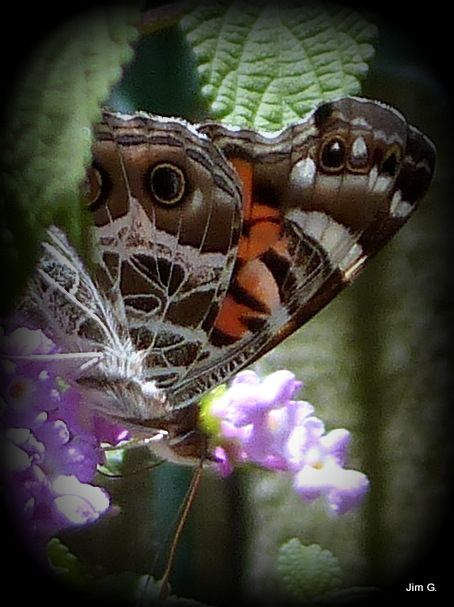 Photo in Nature #insect #moth #flowers