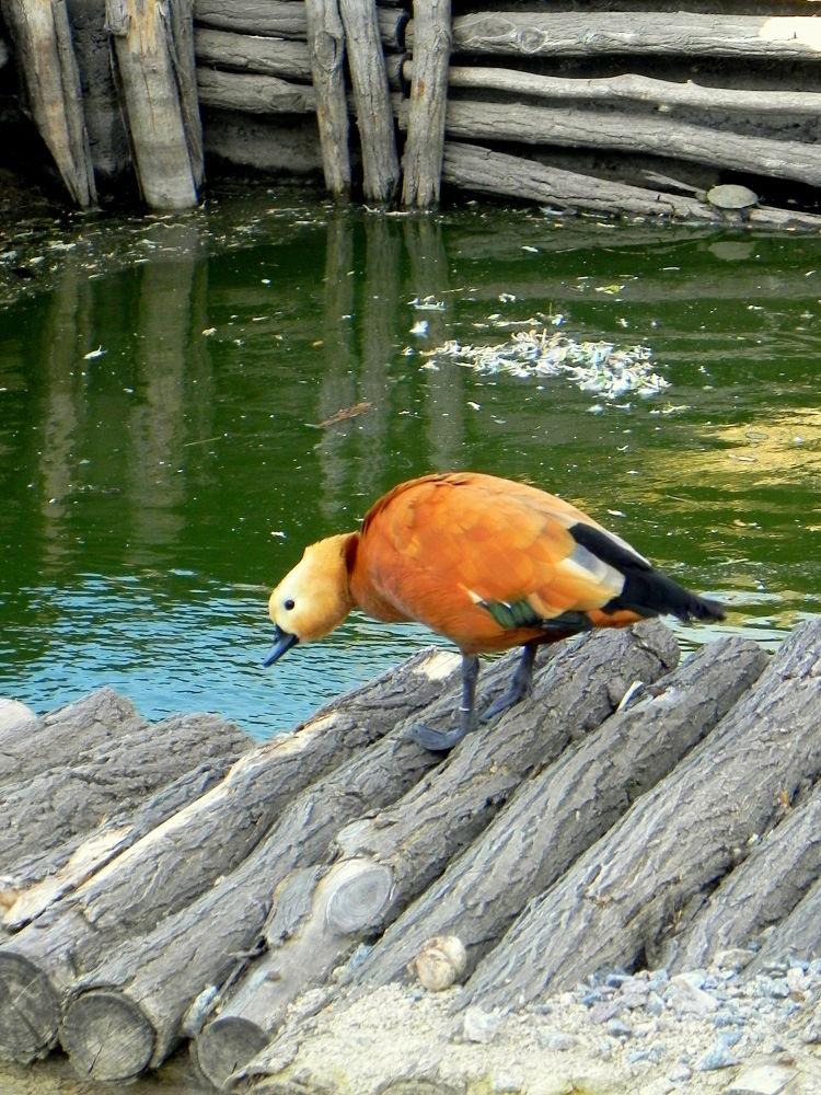 Photo in Random #duck