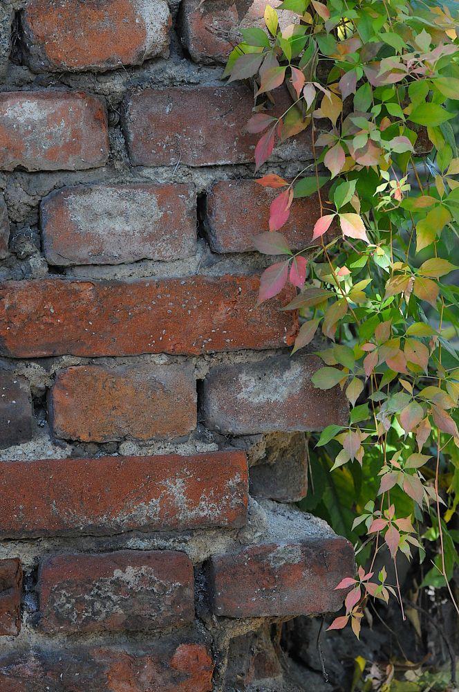 Photo in Abstract #brick #bricks #ivy #plant #leaves #plovdiv #bulgaria #nikon #d300 #baity #travel #tourism #contrast #creativityshared