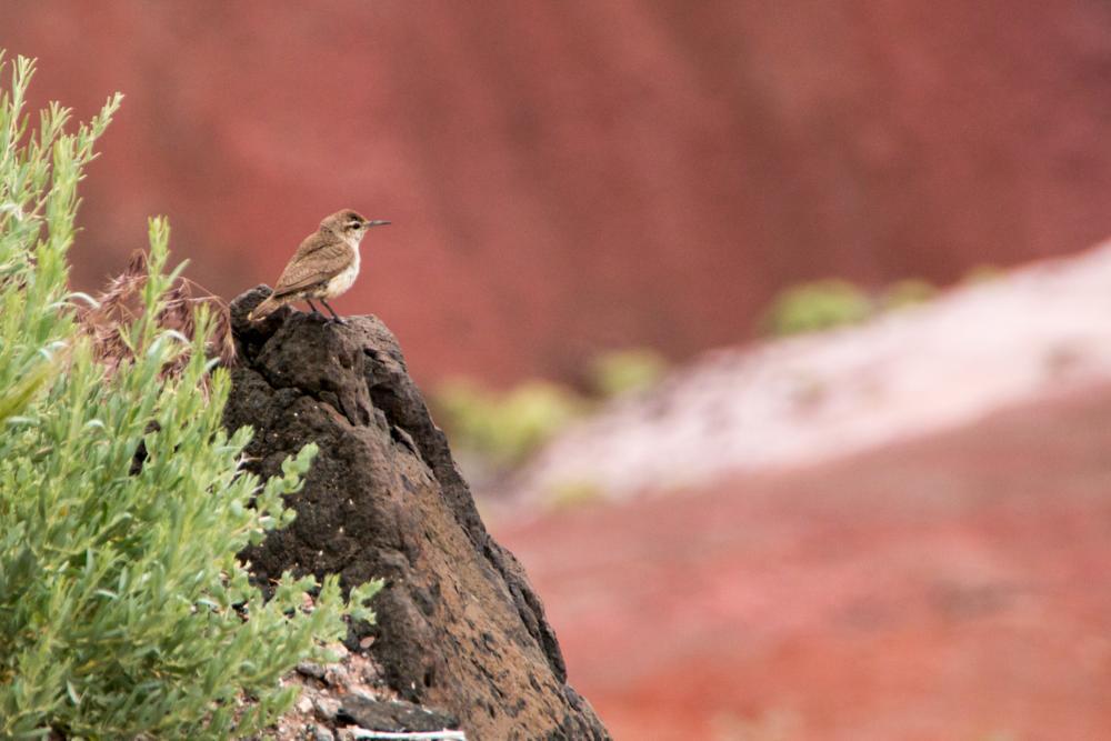 Photo in Animal #2015 #dream wolf photography #painted desert #©scott brown #bird