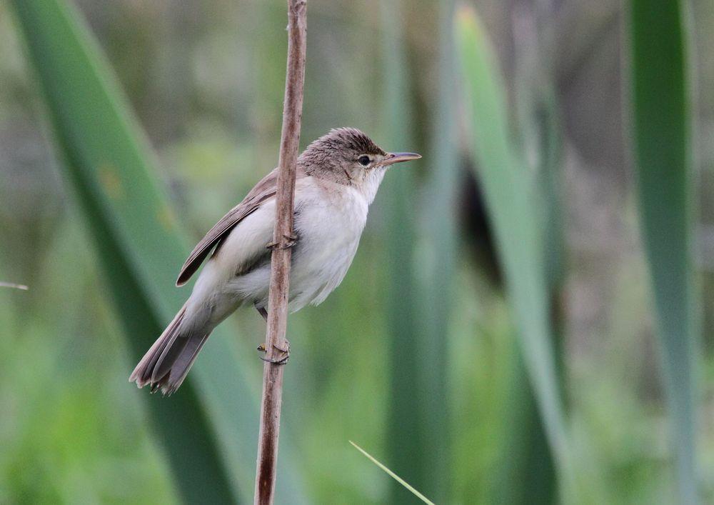 Photo in Nature #bird #nature #wildlife #canon