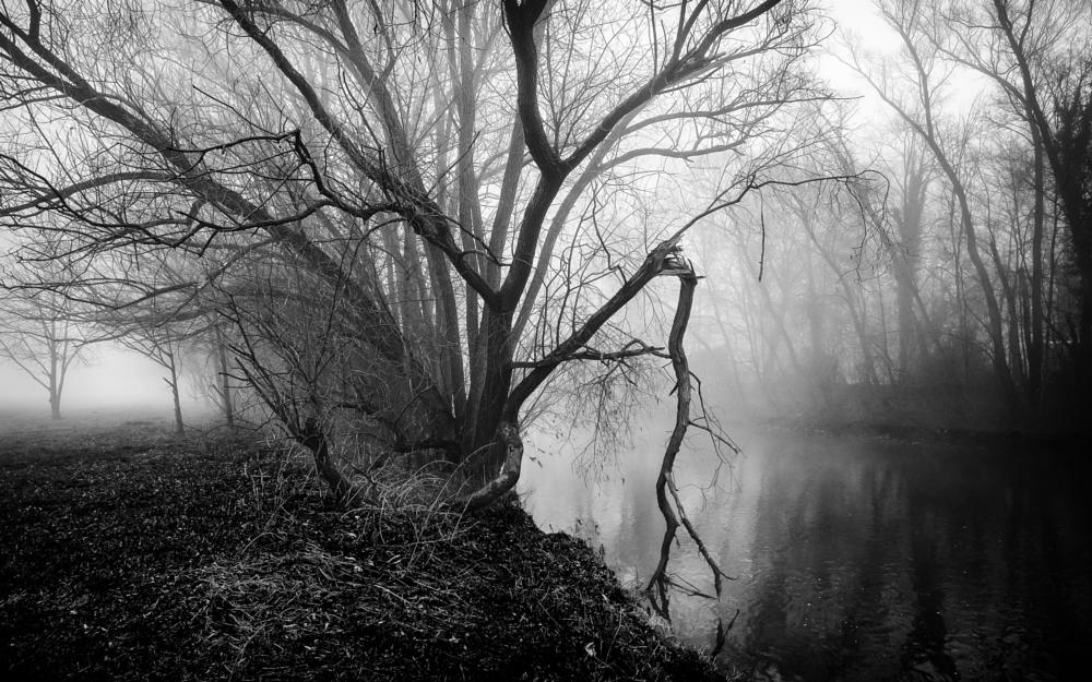 Photo in Black and White #pegnitz #river #fog #mist
