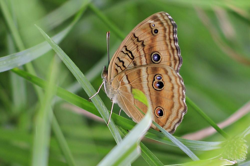 Photo in Animal #butterfly #indonesia #animal