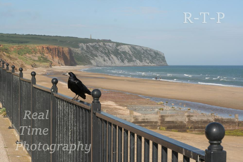 Photo in Landscape #culver down #rook #yaverland #isle of wight