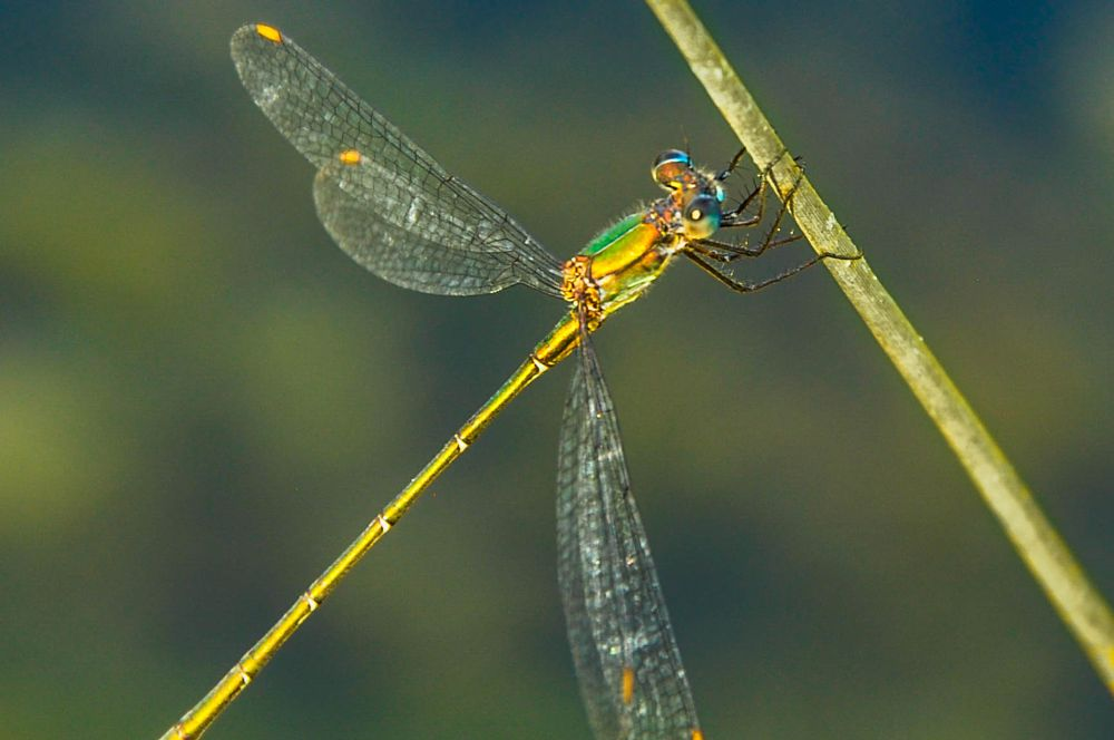 Photo in Animal #animal #dragonfly #blurry...
