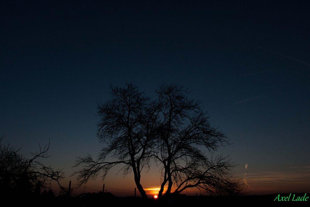 Photo in Landscape #sunset #tree