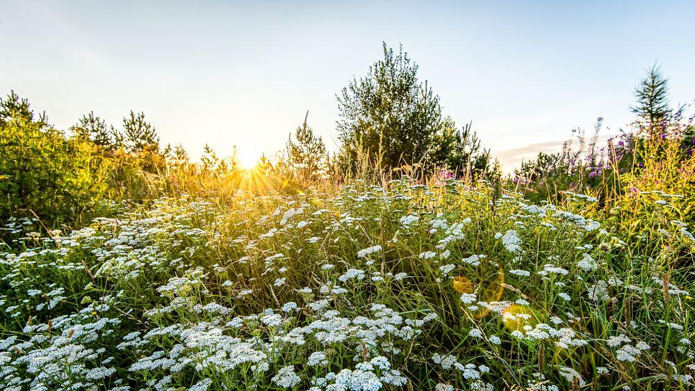 Photo in Landscape #morning sun #summer #nature #alovakia