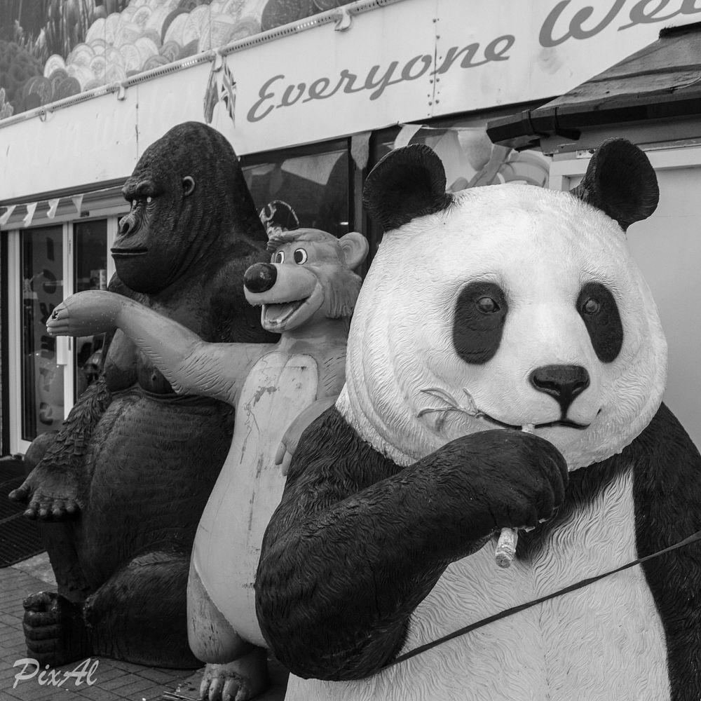 Photo in Black and White #animal #dummies #models #barry island #amusements #seaside #south wales #panda #bear #ape