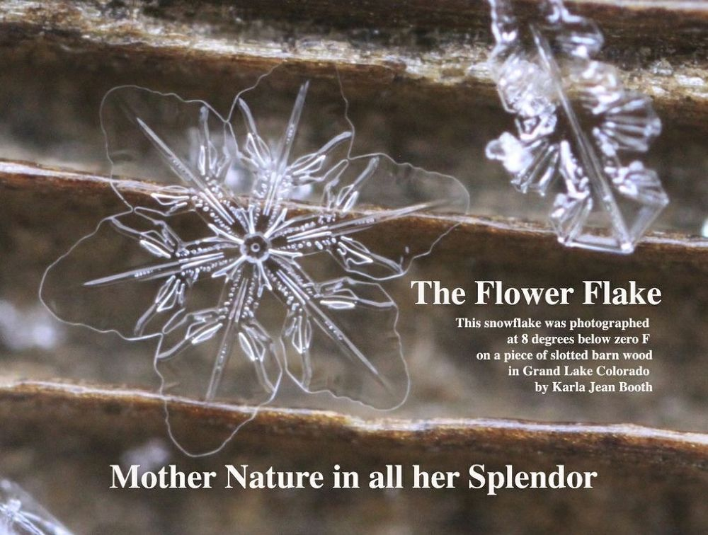 Photo in Macro #snowflake #snow crystal #sectored plate crystal #real snowflake photography by #snow #sacred geometry #real snowflake #colorado #winter #skiing #snowboard #winter theme