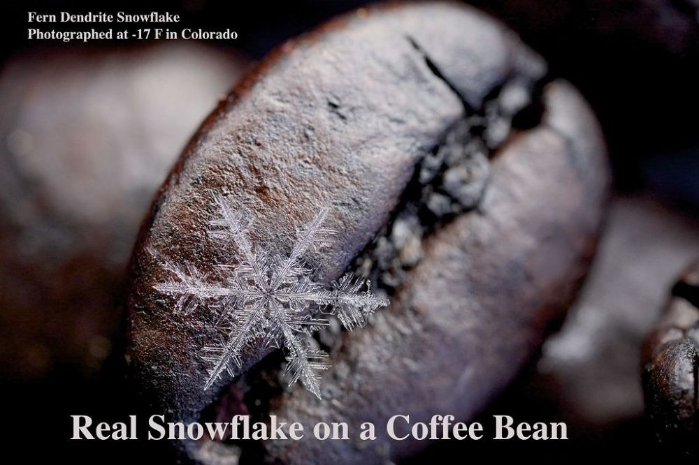 Photo in Macro #snowflake #fern dendrite #coffee bean #snowflake on coffee bean #grand lake #colorado #rocky mountain national park #karla jean booth #real snowflake photography #as seen on 9 news