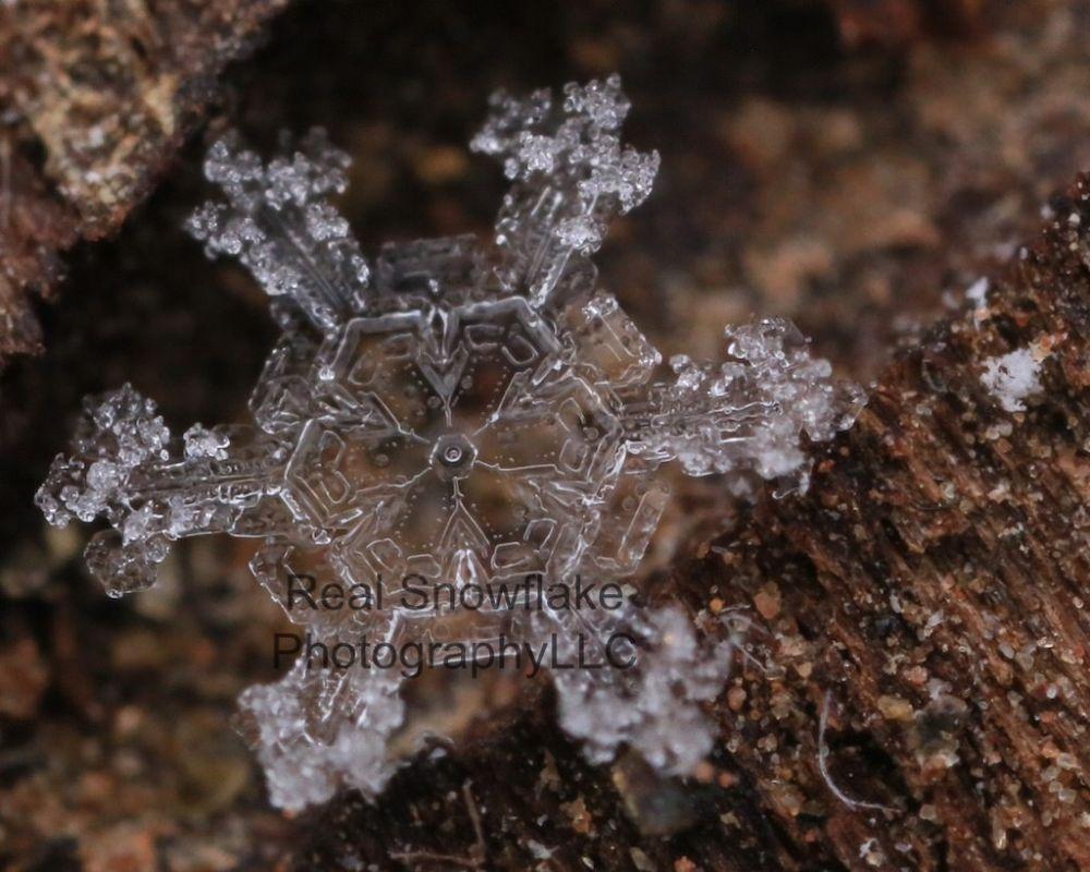 Photo in Macro #snowflake #snowflake with rime #karla jean booth #www.realsnowflakephotography.c #as seen on 9news #macro snowflake photography #grand lake #colorado