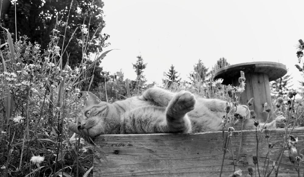 Photo in Black and White #cat #animal #black and white
