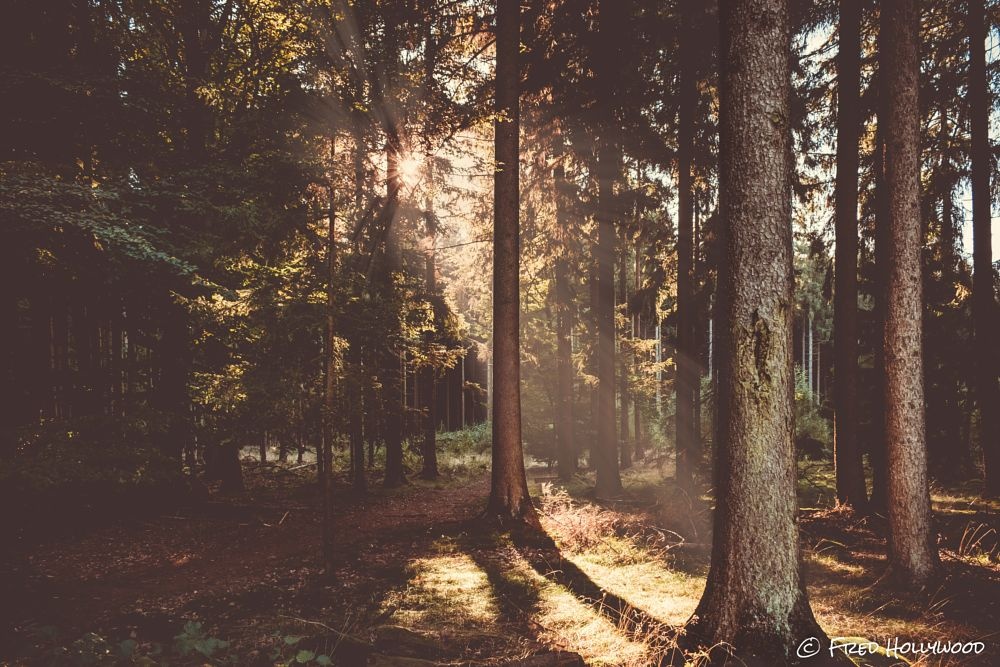 Photo in Nature #taunus #forest #wood #magic #sunset #nature #awesome