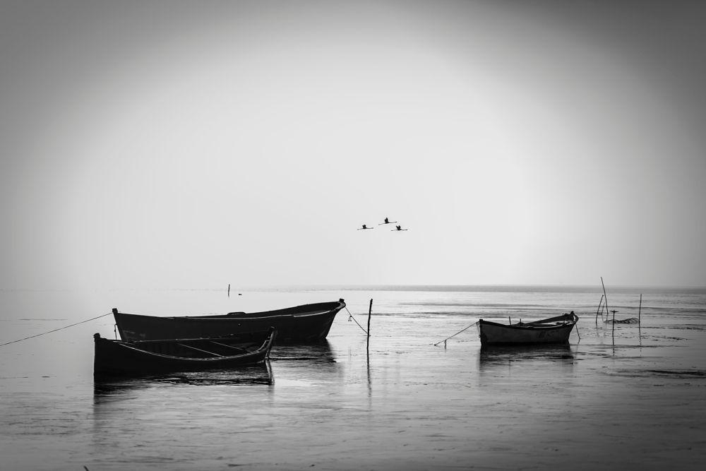Photo in Black and White #bnw #monocrome #lake #seascape