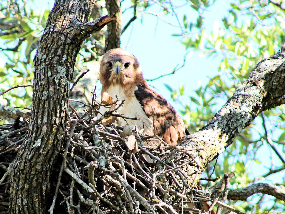 Photo in Animal #hawk