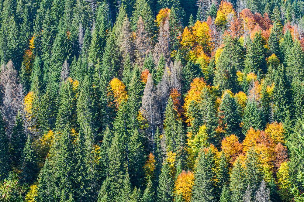 Photo in Random #autumn #nature #grren #yellow