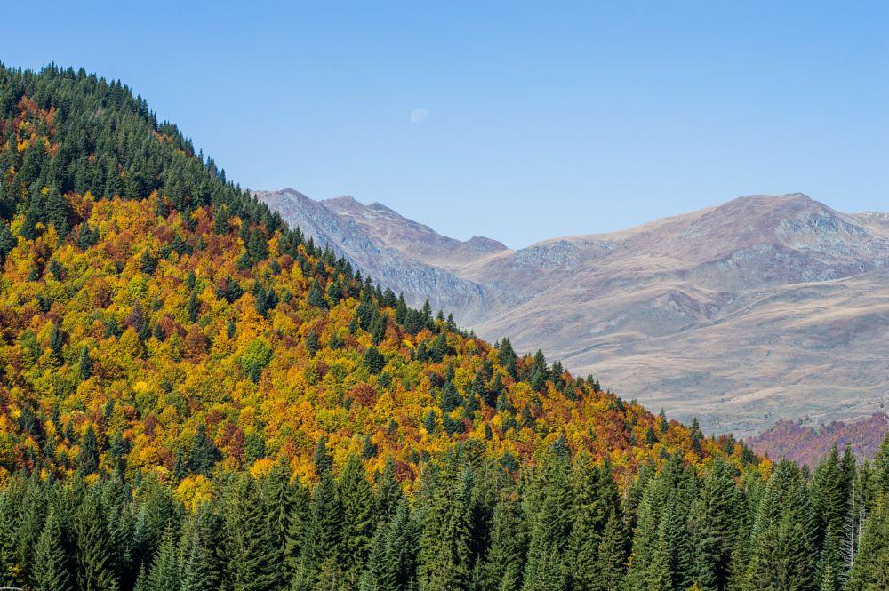 Photo in Random #autumn #nature #green #yellow