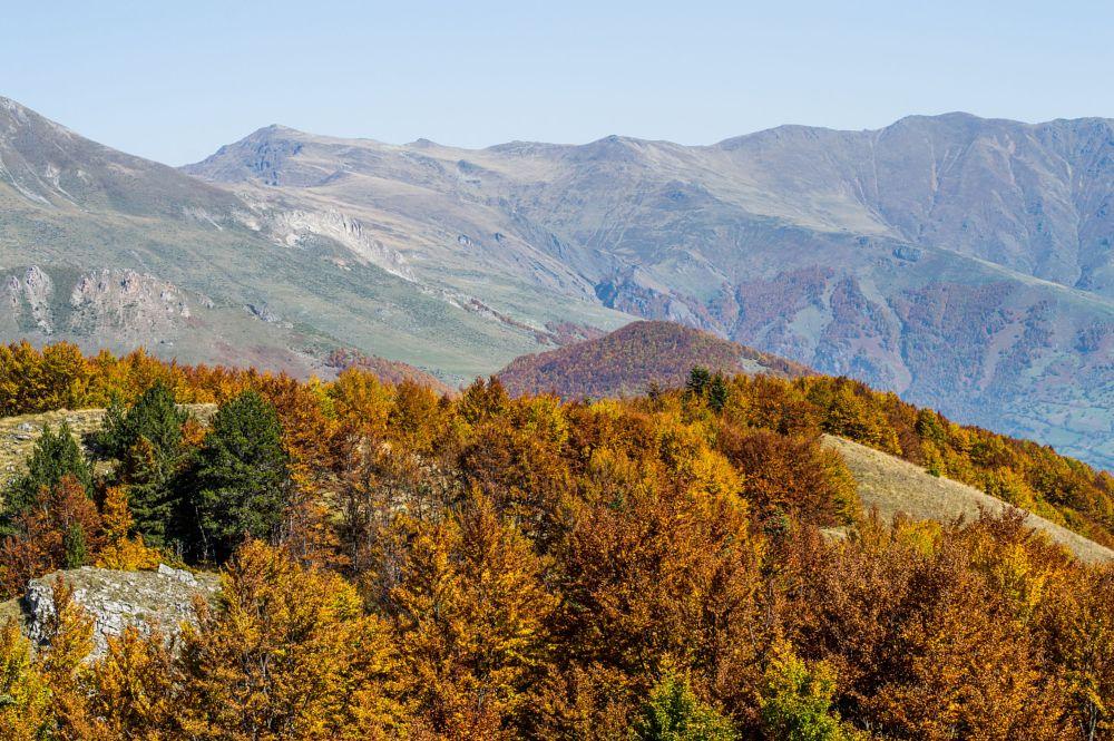 Photo in Random #autumn #nature