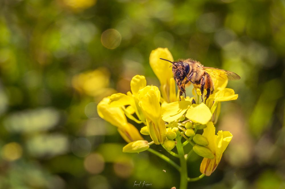 Photo in Macro #yellow #flowers #beauty #spring #colors #macro #flower #bokeh #beautiful #green #insect #garden #field #bee #farm #blossom #wild #eating #depth of field #insects