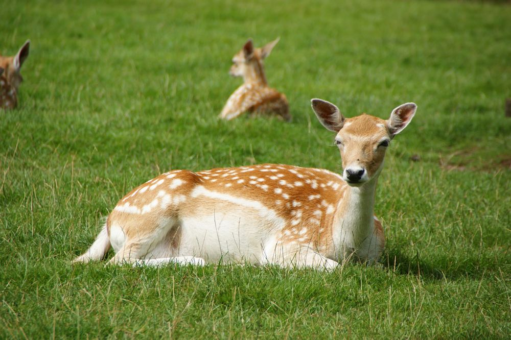 Photo in Animal #animal