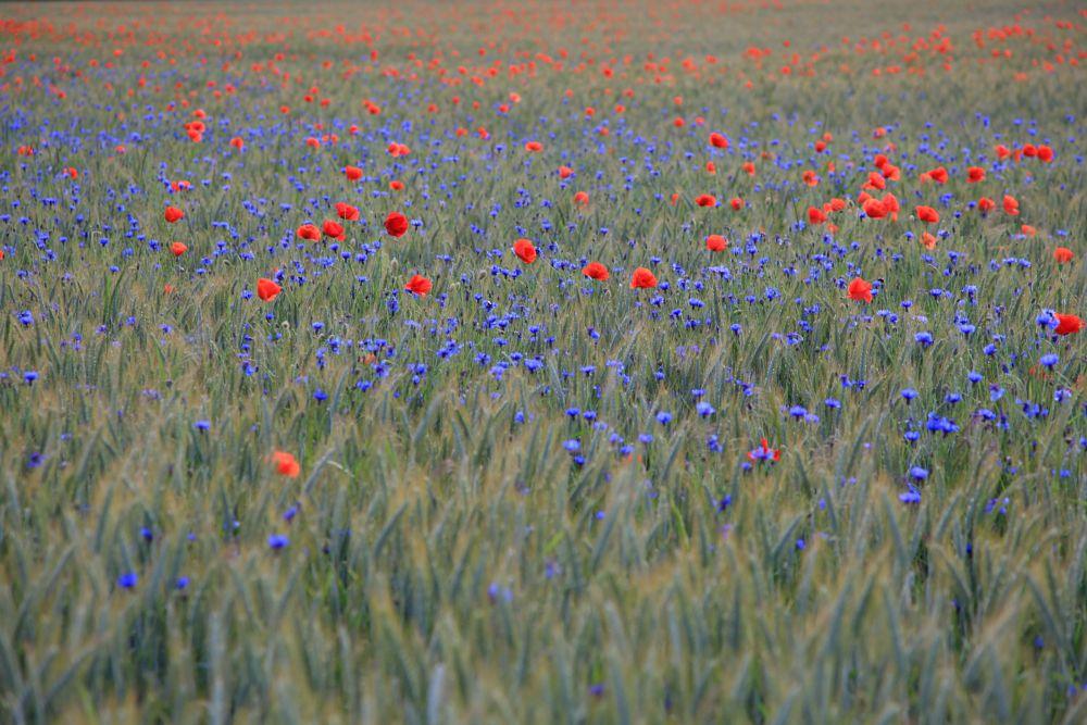 Photo in Landscape #field