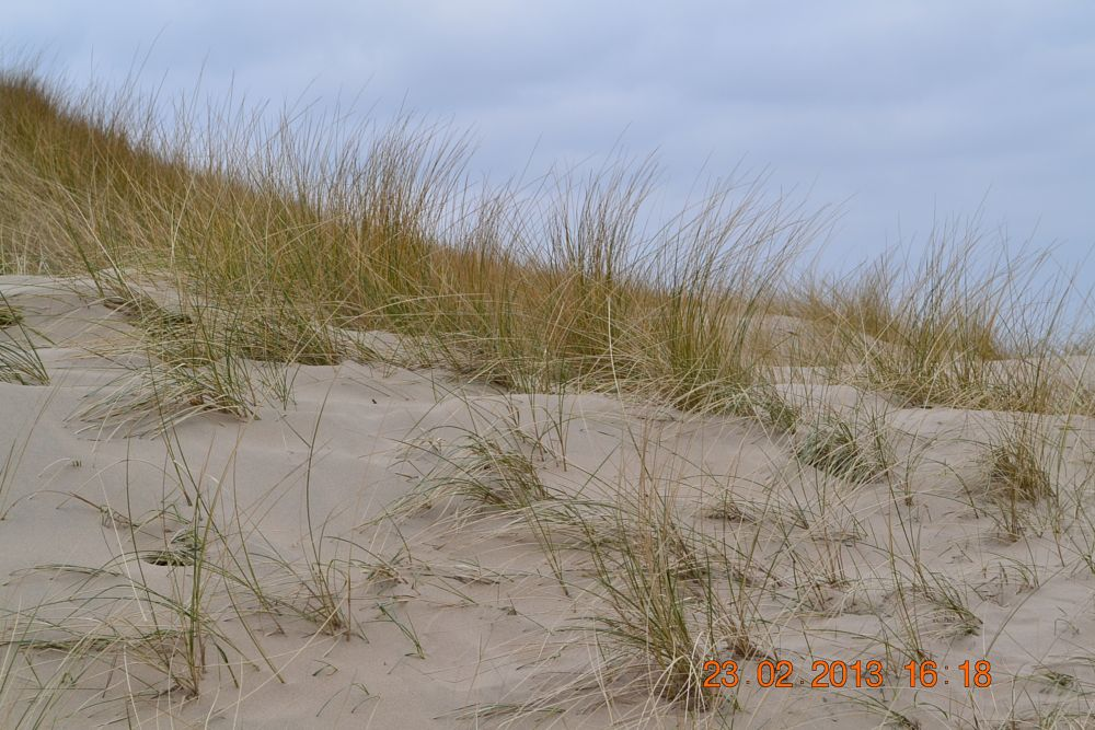 Photo in Sea and Sand #sea #sand #seascape #landscape #holland #bergen #dunes