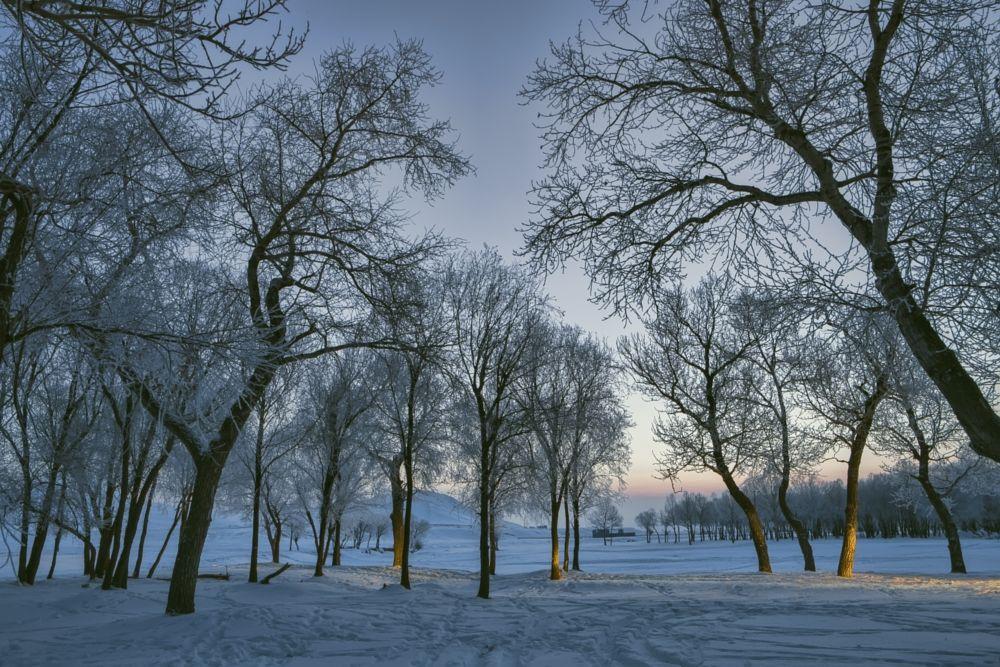 Photo in Landscape #mongolia #winter #snow #trees