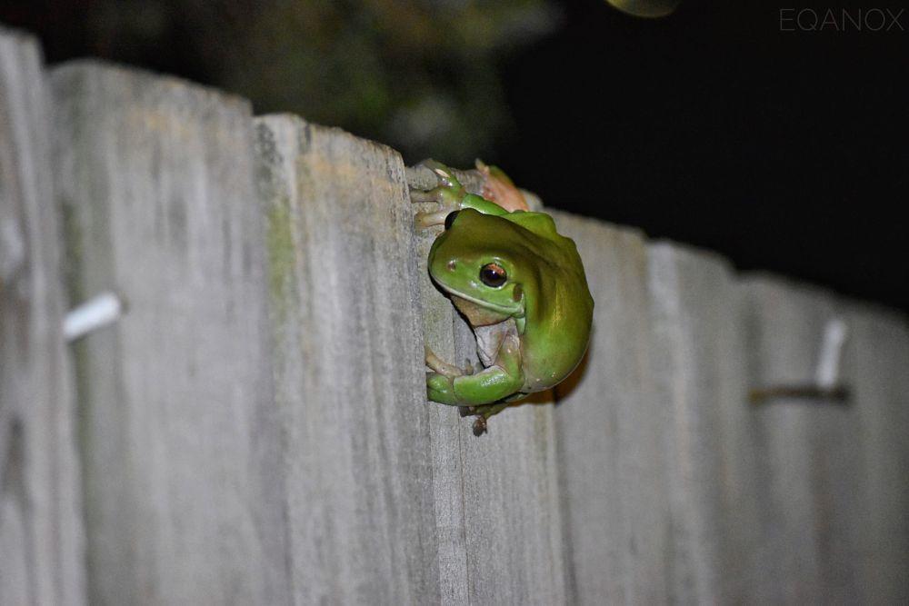 Photo in Random #frog #macro #animal #amphibian #photography #landscape #dark #night