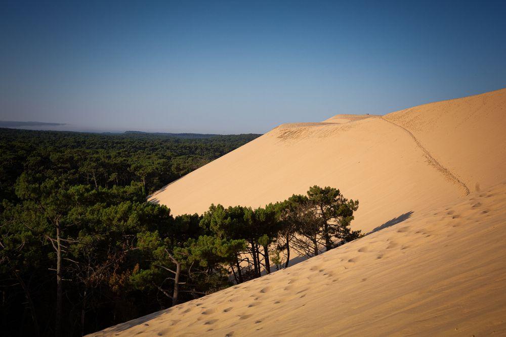 Photo in Landscape #dune #pilat #landes #gascogne #forest #tree #silver #coast #arcachon #basin #aquitaine #highest #europe