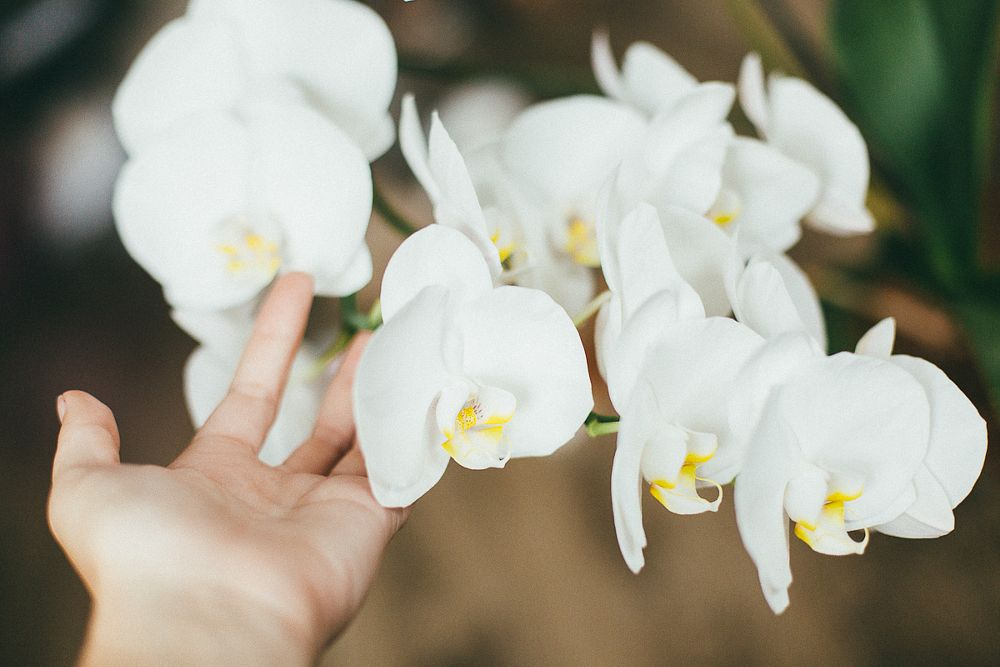 Photo in Still Life #home #orchid