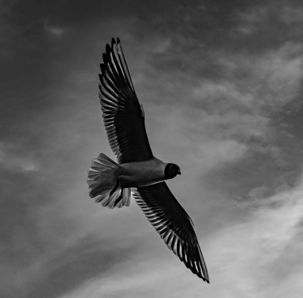 Photo in Black and White #sky #bird #light #black and white #alone #dramatic #wildlife #latvia
