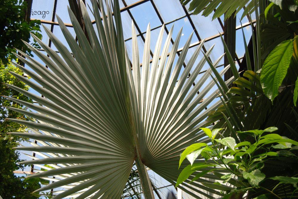 Photo in Nature #sunlight #window #warmth #tree #massive #impressive #palm