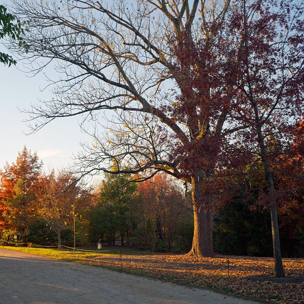 Photo in Landscape #mount vernon #tree #sunset #sonyalpha