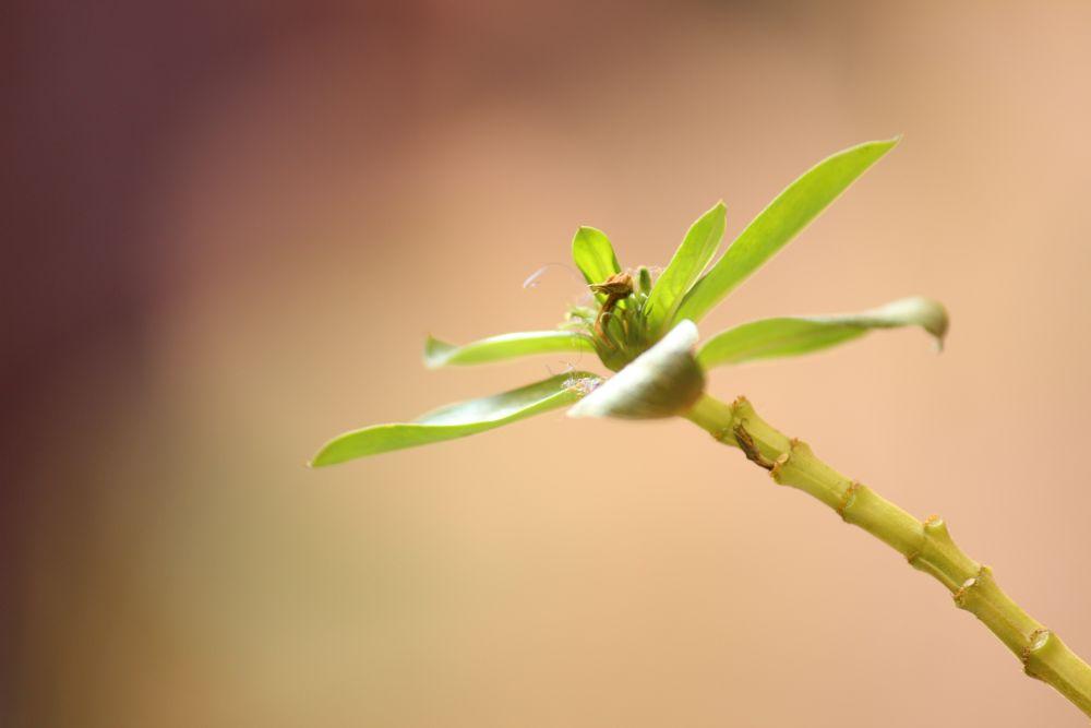 Photo in Still Life #plant #still life #life