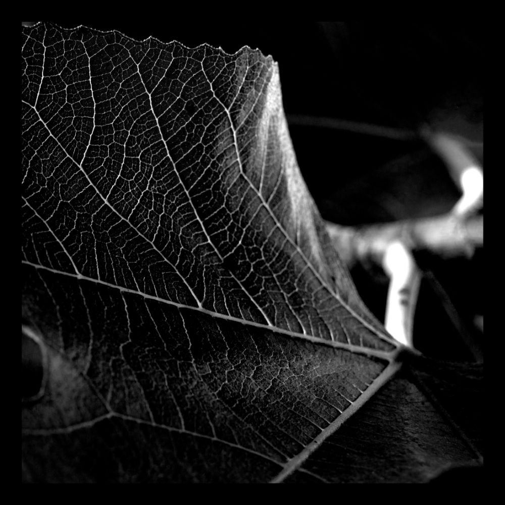 Photo in Black and White #plants #contrast #light #nature