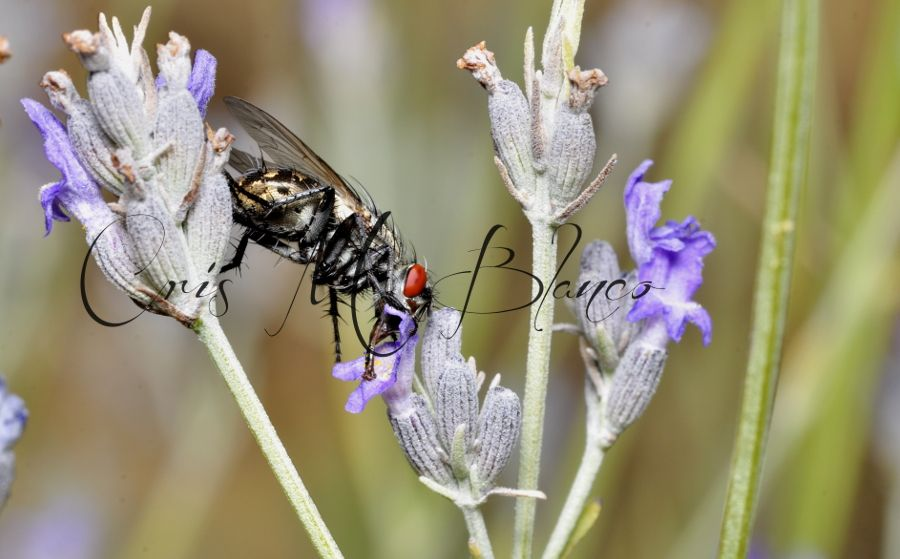 Photo in Macro #macro #nature