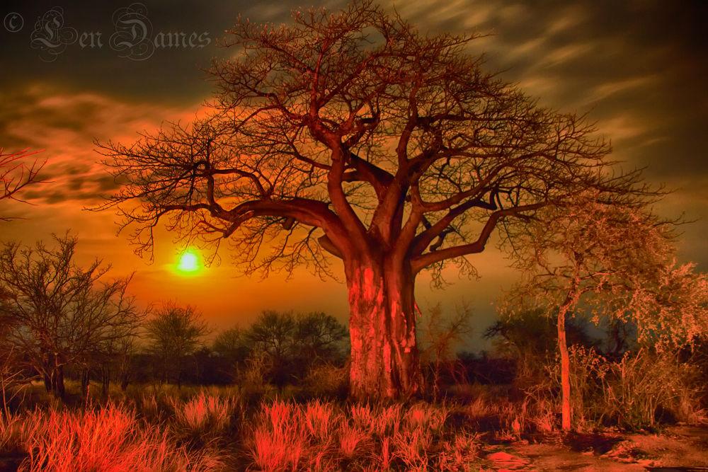 Photo in Nature #moon #tree #boabab #bushveld #night