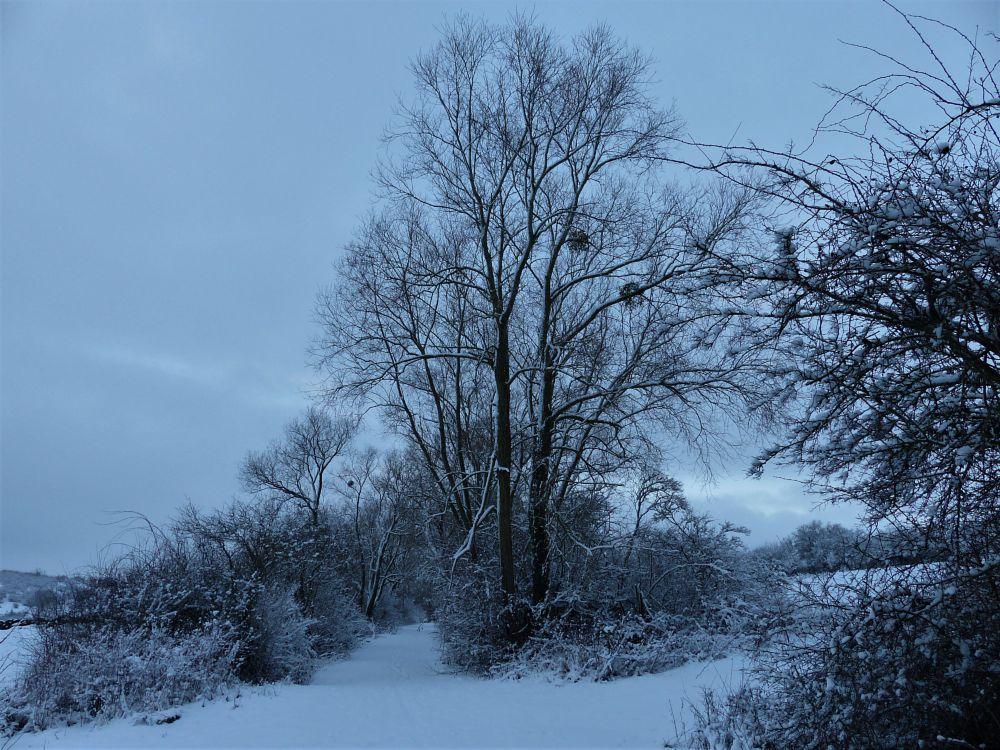 Photo in Landscape #winter #snow #path