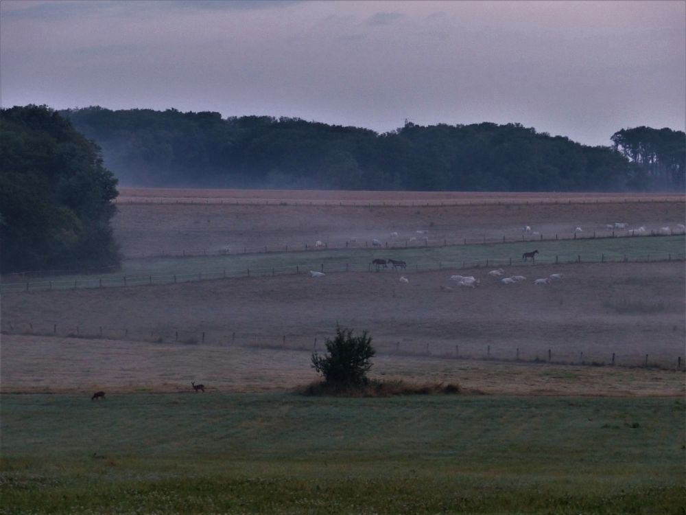 Photo in Nature #summer #early morning #wake up #mist #cows #horses #roe deers