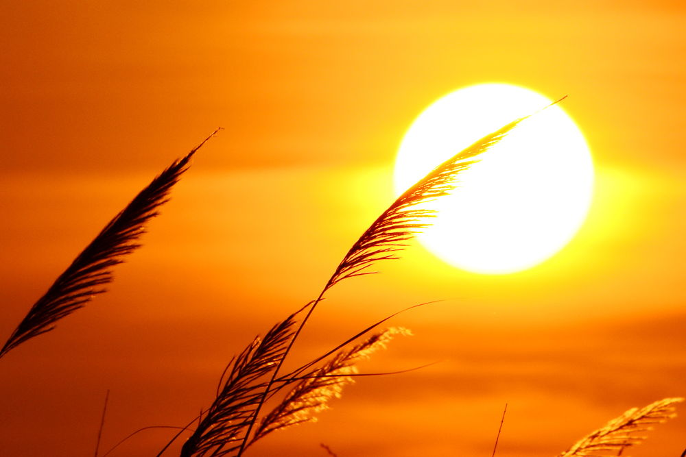 Photo in Random #sun #sunset #nature #twilight