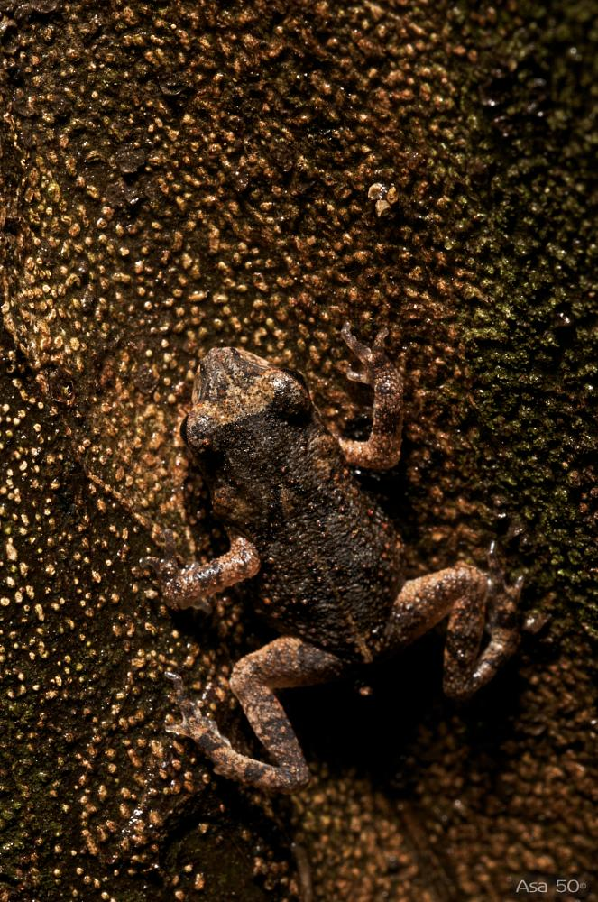 Photo in Macro #frog #macro #up close #animal #nature #costa rica #tropical forest #at night #mimesis #amphibian