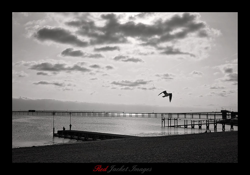 Photo in Sea and Sand #sea #seaside #sand #sun #sky #bird #seagull #pier #water #black and white #clouds