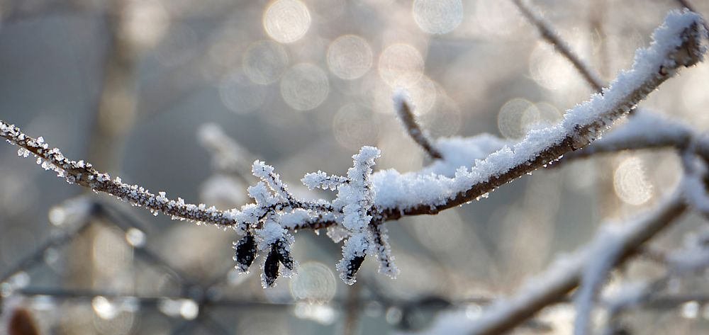 Photo in Macro #frost #winter #cold #twig #white #bokeh #close-up
