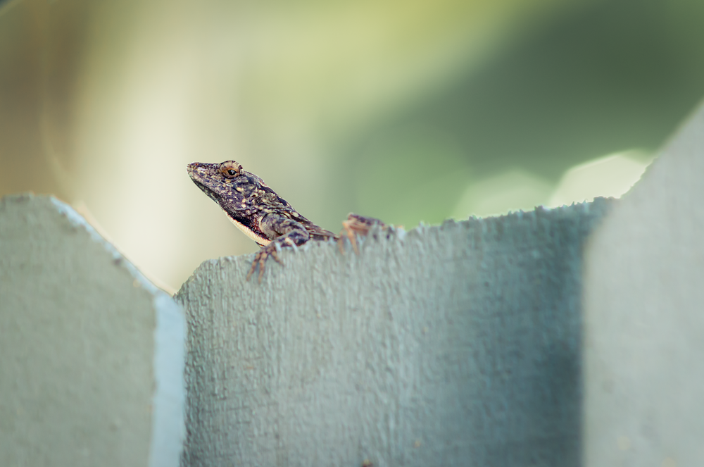 Photo in Nature #lizard