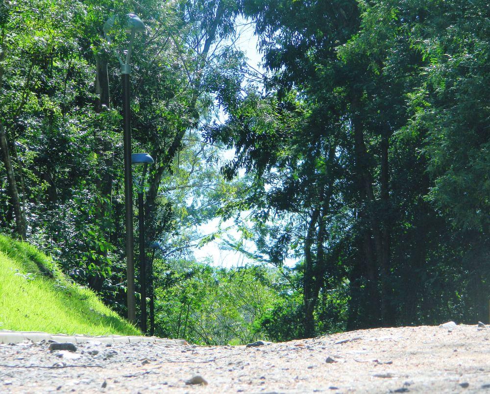 Photo in Landscape #park #tree #green #hot