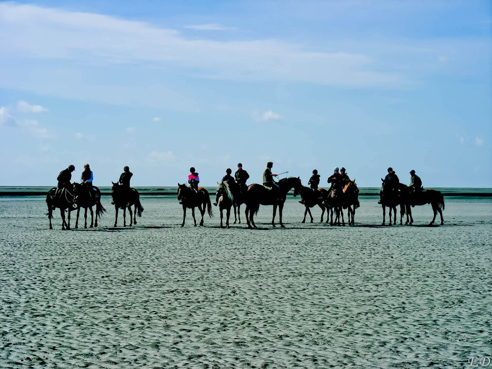 Photo in Random #beach #sea #horses #animals #landscape