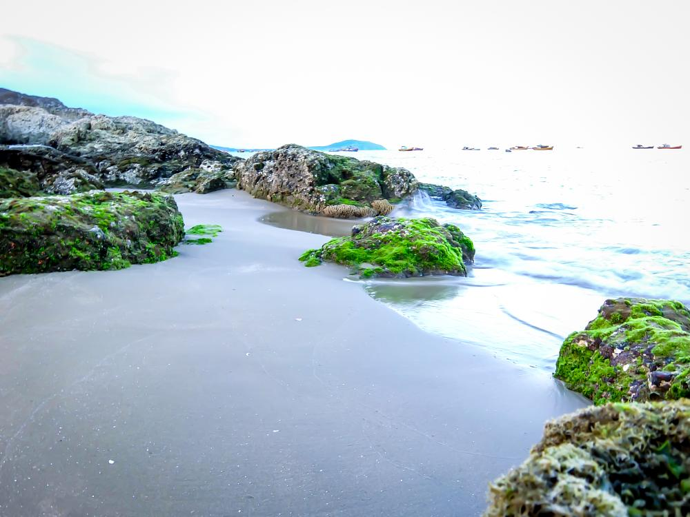 Photo in Nature #water #sea #rock #moss #sea shore #beach #sand