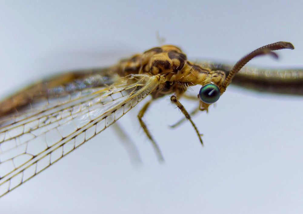 Photo in Macro #insect #insects #wings #wing #fly #macro